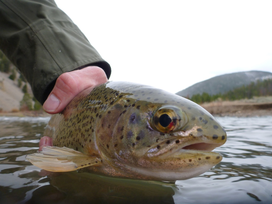 TroutinWater